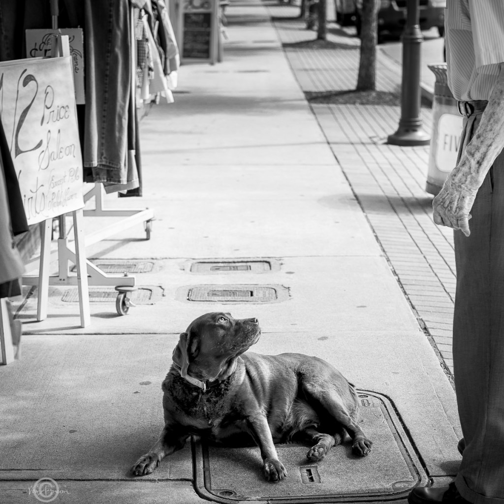 Five Points Pooch©Kathryn Van Aernum