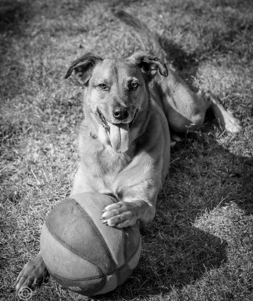 Gimme The Ball©Kathryn Van Aernum