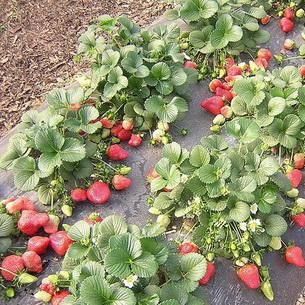 Уход за почвой на садовом участке осенью