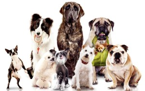 onderzoek-veiligheid-hond
