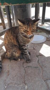 Kissa ei suinkaan suhissut meille, vaan toiselle kissalle joka oli tulossa lähelle! :)