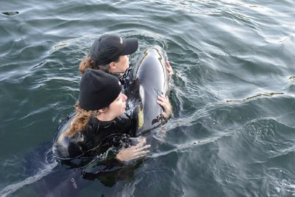 Levi Release Day - Vancouver Aquarium