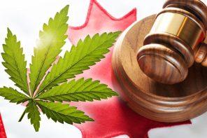 Marijuana: The other effect