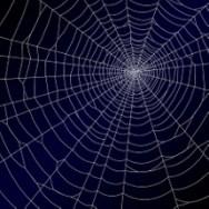 Spider Web 4.1