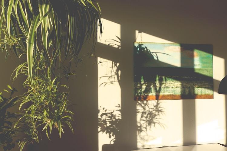 natural home interior design natural light indoor plants