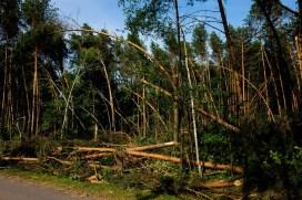 Drzewa połamane w niedawnej wichurze. Tutaj nie było ciężkich maszyn do szybszego uprzątnięcia dróg