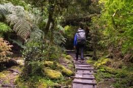 Spacer w górę doliny Cochamo