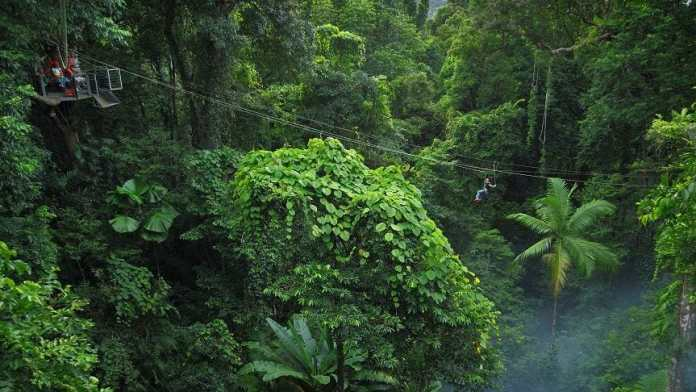 Australia: Man dies, spouse injured at the Jungle Surfing in Daintree Rainforest