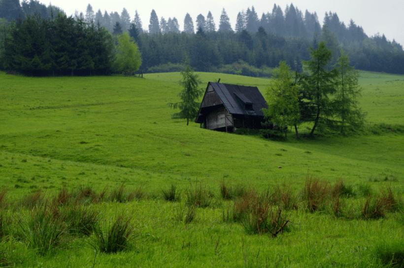Eksplozja zieleni - Jaworki Pieniny