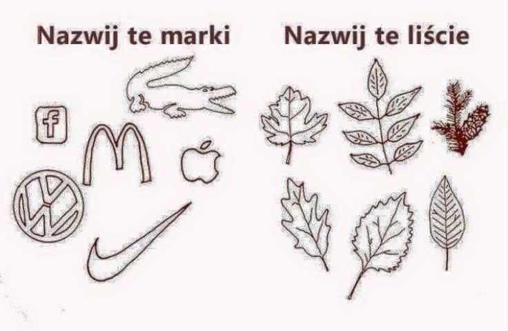 drzewa i ich liście
