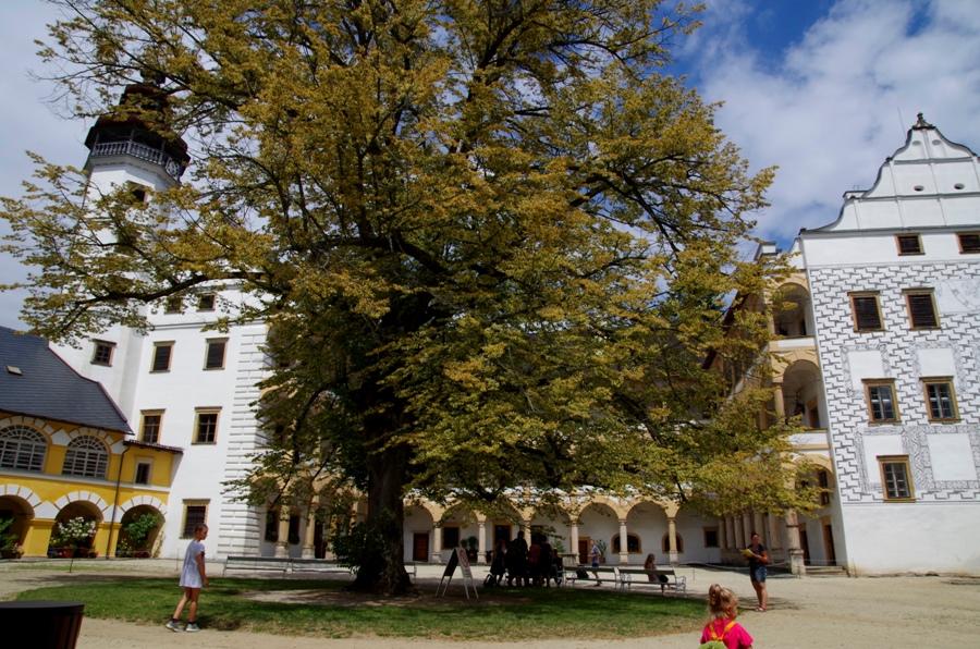 Zamek Velke Losiny - dziedziniec ze starą lipą