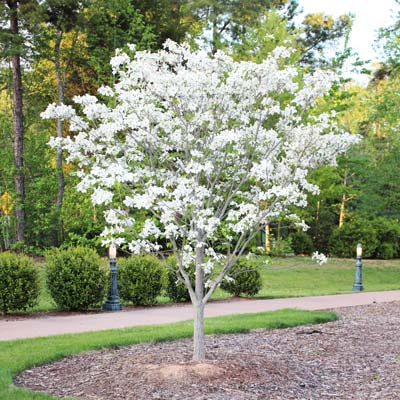 trees shrubs & plants - taylor