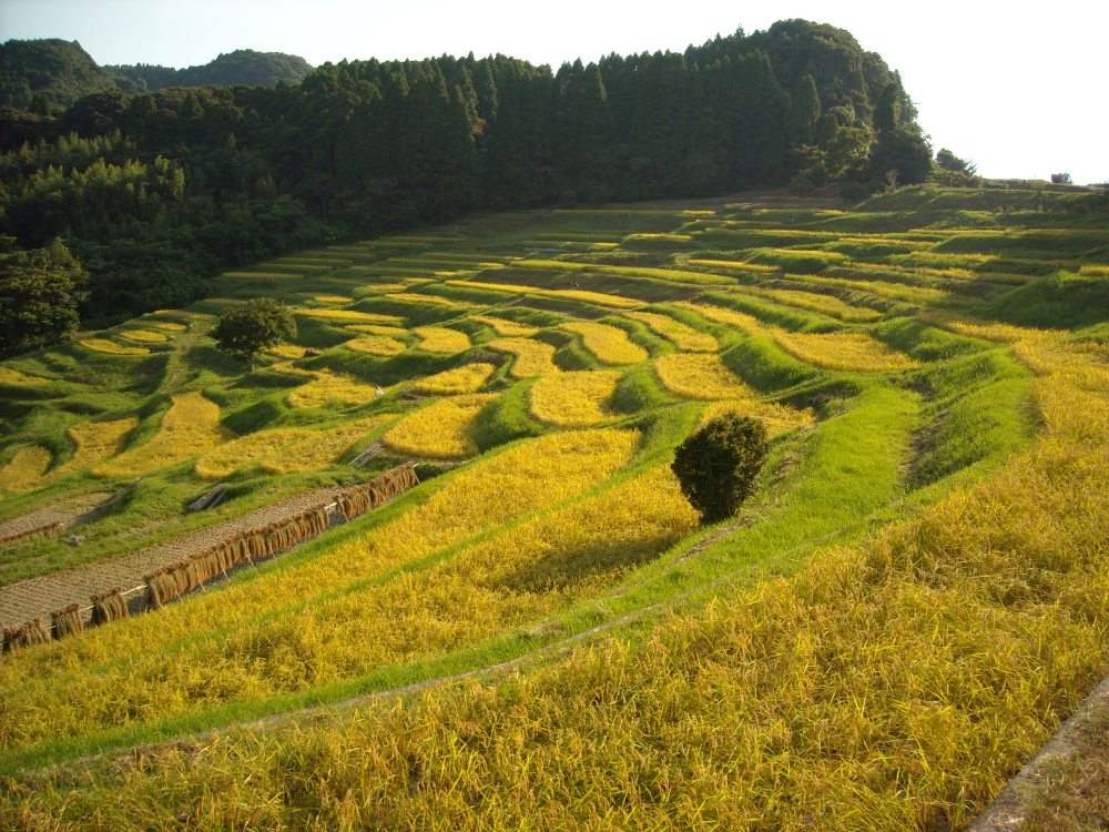 Must-see rice field terrace (6/6)