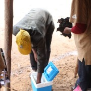 Community vaccinator taking vaccine from cooler box prior to vaccinating chickens