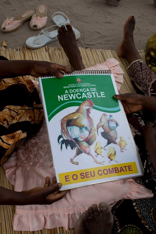 Newcastle disease control resources