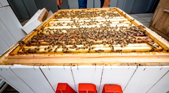 ABB Analyzes The Habits Of Bees To Develop New Computer Vision Tech