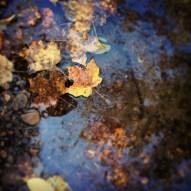 Fall Leaves - Minneopa State Park, Minnesota