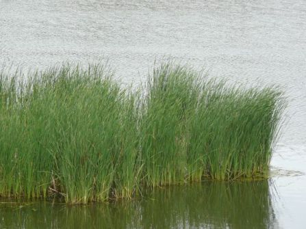 nature_tall_grass_0041_01_preview