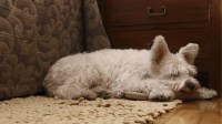 Can My Dog Sleep In My Bed With Me? - Kyle Kittleson ...