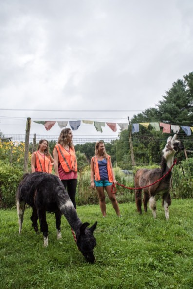 From left, Laua Perry, Brittany Batterton, and Lidia Ryan with llamas from Rowanwood farms after a hiking adventure in Newtown, Conn. on Autust 21, 2016.