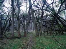 Brooks Hill Trail