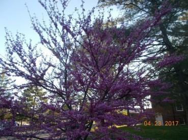 A pretty tree