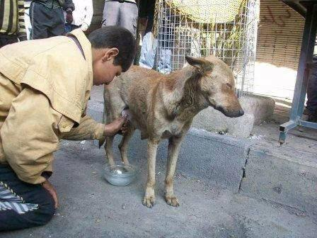 In desperation, a boy in Yarmouk tries to milk a dog to provide food for his baby brother (February 2014)