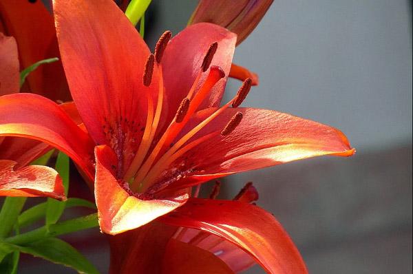 Hình hoa đẹp 4