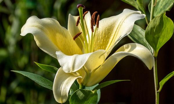 Hình hoa đẹp 5