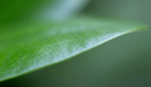 free nature stock-フリー画像