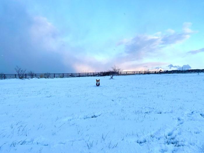 雪上に立つテンテン