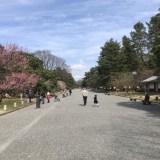 本日の『京都御苑』の梅と枝垂れ桜
