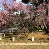 京都御所の梅とプレサンスコーポレーションのホテル