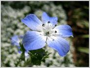 梅小路公園の花壇