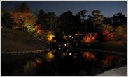 梅小路公園の朱雀の庭の紅葉のライトアップ