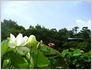 朱雀の庭の全景