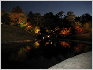朱雀の庭の紅葉のライトアップ