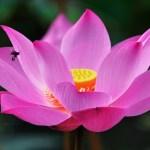 芸能人から学ぶ憧れ幸せ結婚生活を続けている美女の生き方 桐島カレンさん