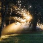 1/14 どの道を行くにしても自分が創造主になって生きないとね 根を張って大木になろ