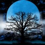 3/16 野心と悟りの金星逆行の本音は絶対的な愛がほしい収穫の太陽はイメージ力で引き寄せ