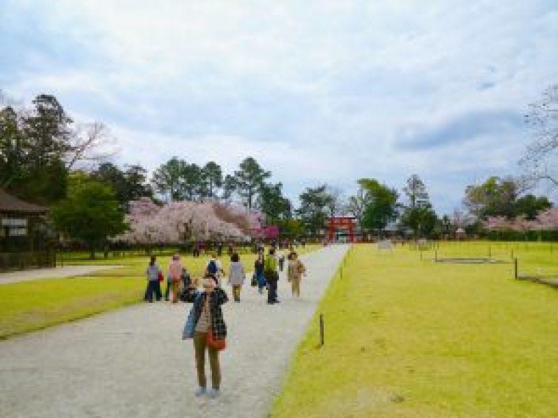 上賀茂神社桜5