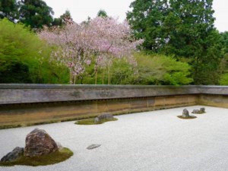 龍安寺桜お花見15