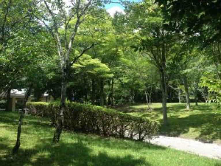 宝ヶ池公園夏99