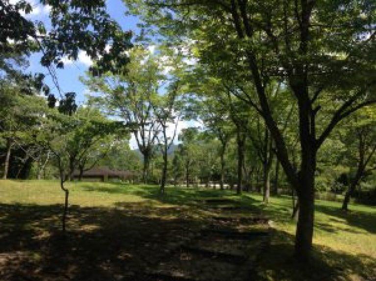 宝ヶ池公園夏88