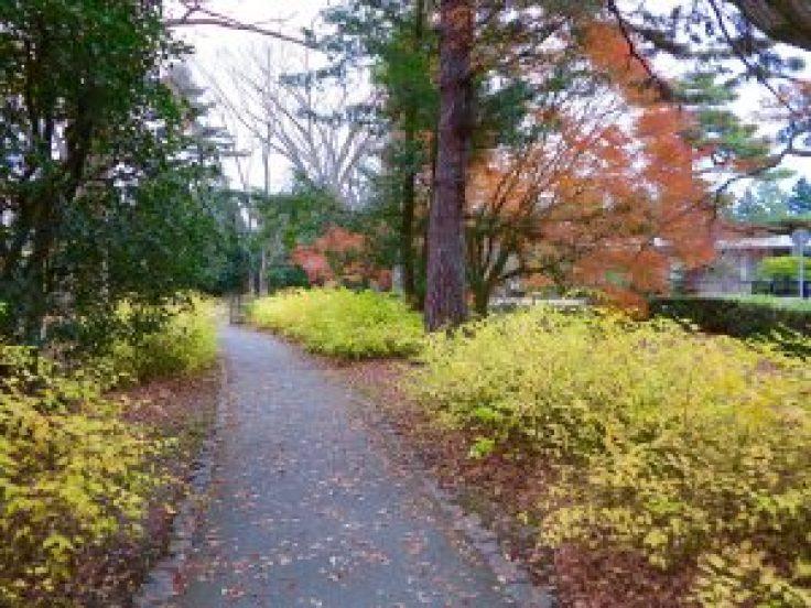 京都御苑11