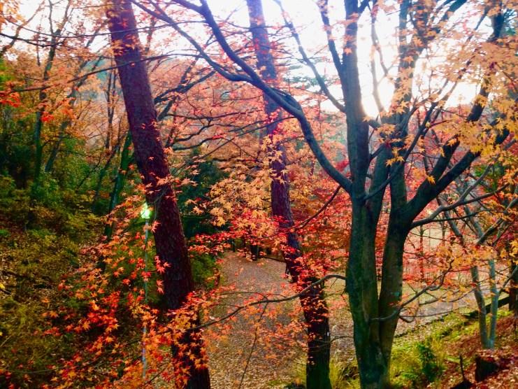 宝ヶ池公園紅葉