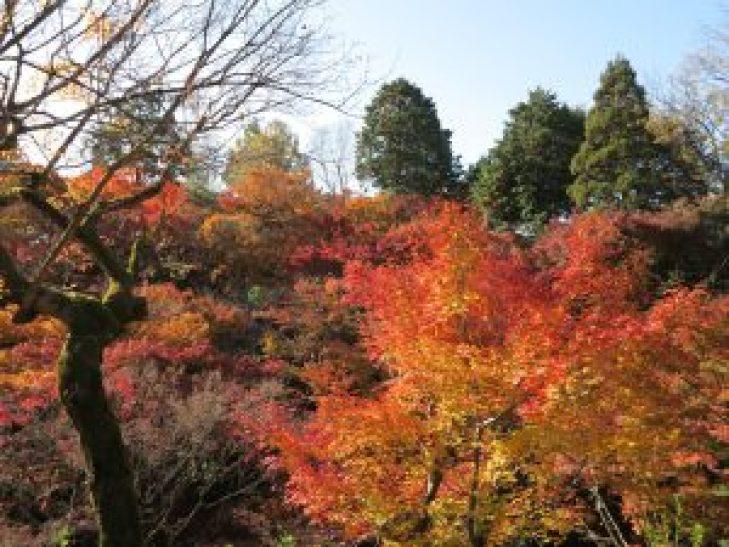 東福寺紅葉11