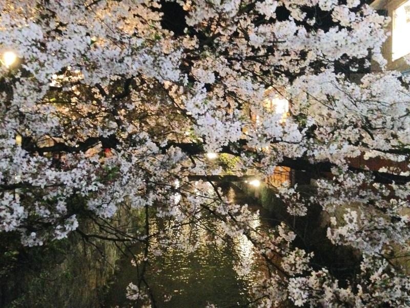 祇園白川高瀬川桜お花見9