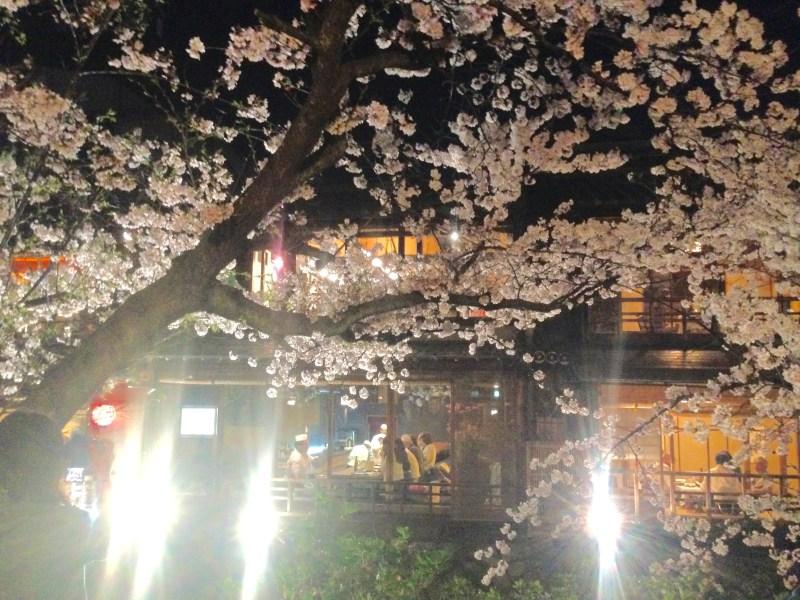 祇園白川高瀬川桜お花見13