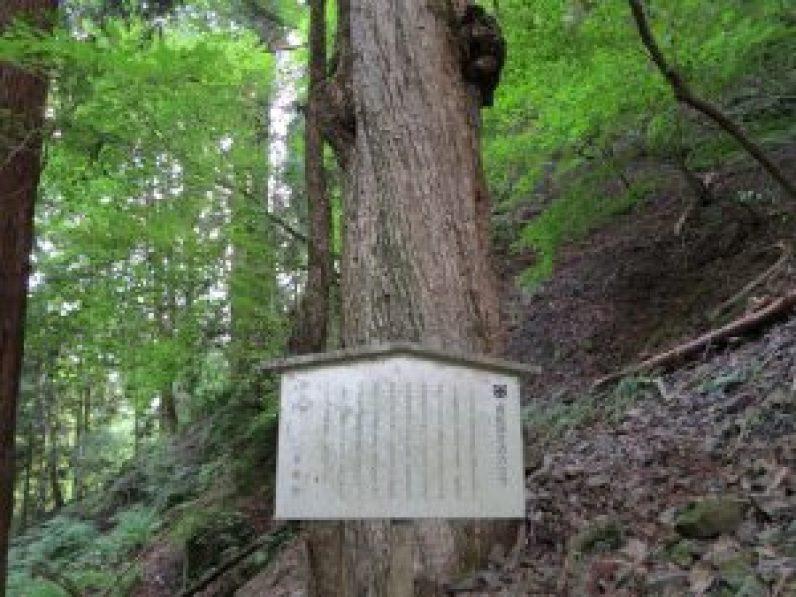 夏七夕祭り貴船神社24